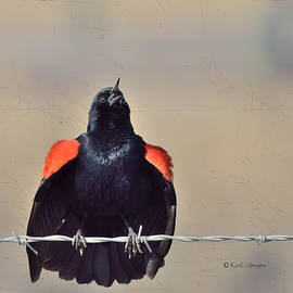 Blackbird Singing by Kae Cheatham