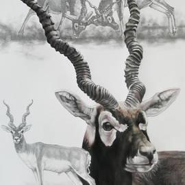 Blackbuck by Barbara Keith