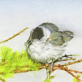 John Birnie - Blackcap Northern Nightingale