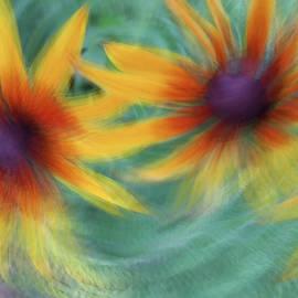 Blanket Flower Bingo by Deborah Hughes