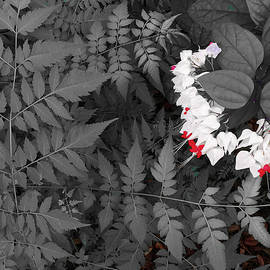 Bleeding Hearts and Ferns Subtle Color by Aimee L Maher ALM GALLERY