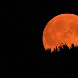 Joy McAdams - Blood Moon