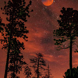 Jan and Burt Williams - Blood Moon Over Custer State Park