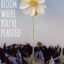 Bloom Where Planted Poster by Tim Nyberg