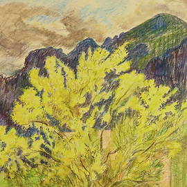 Blooming Palo Verde by Bonnie See