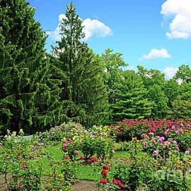 Regina Geoghan - Blooming Rose Garden NJ