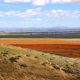 Viktor Savchenko - Blooming Season In Antelope Valley