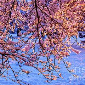 Viktor Birkus - Blooming tree at winter. 2