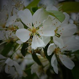 Richard Andrews - Blossom
