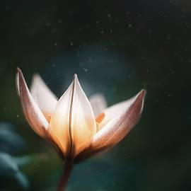 Blossoming Light by Scott Norris