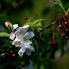 Blossoms and Berries by Karen Majkrzak