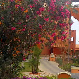 Blossoms Cabo San Lucas Mexico by Charlene Cox