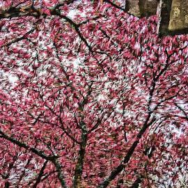 Lenore Senior - Blossoms in Spring