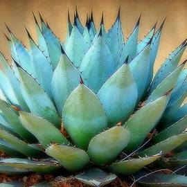 Blue Agave Against Adobe Wall by Toni Abdnour