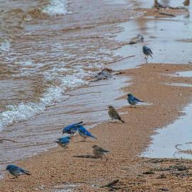 Jim Garrison - Bluebird Beach