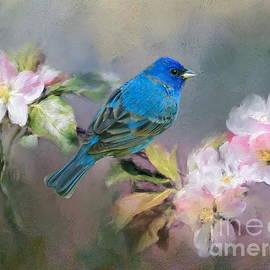Myrna Bradshaw - Blue Beauty in the flowers