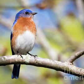 Ricky L Jones - Blue Bird