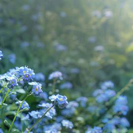 Blue Blooms by Gene Garnace