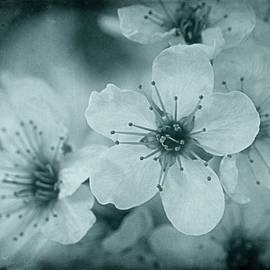 Blue Blossoms by Patricia Strand