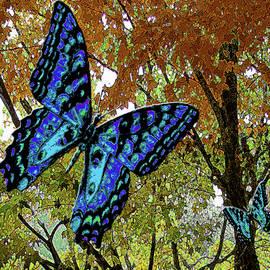 Blue Butterflies in Autumn by Michele Avanti