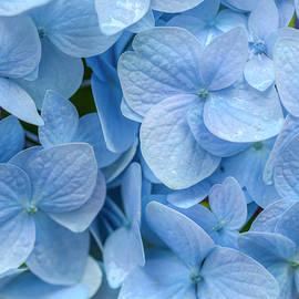 Kristina Rinell - Blue Cluster