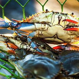 Karen Wiles - Blue Crab Cha Cha Cha