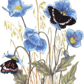 Stanza Widen - Blue-Day Butterfly