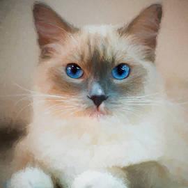 Ericamaxine Price - Blue-Eyed Ragdoll - Painting