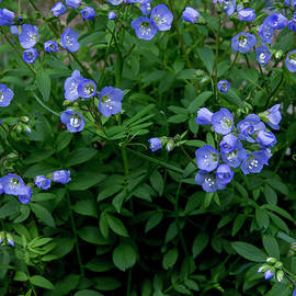 Blue flowers in green grass