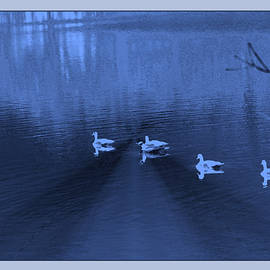 Gretchen Wrede - Blue Geese on Sapphire Pond