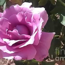 Lynn Michelle - Blue Girl Rose