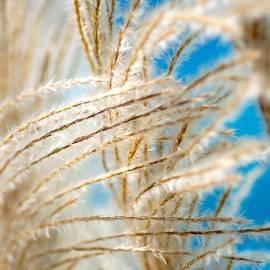 Blue Grass by Greg Hayhoe