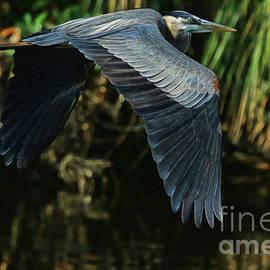 Deborah Benoit - Blue Heron Series The Pond