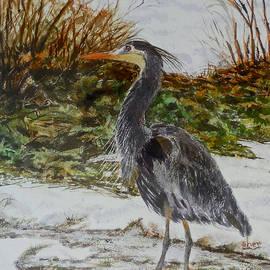 Sher Nasser - Blue Heron