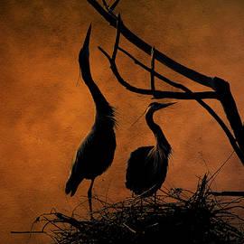 Lowell Monke - Blue Herons Nesting at Twilight