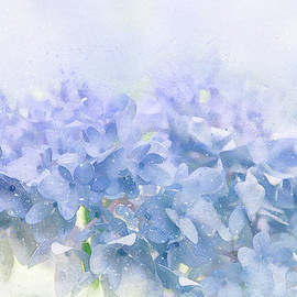 Terry Davis - Blue Hydrangea Light
