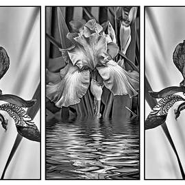 Steve Harrington - Blue Iris Triptych bw