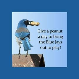 Blue Jay And A Peanut by Patricia Barmatz