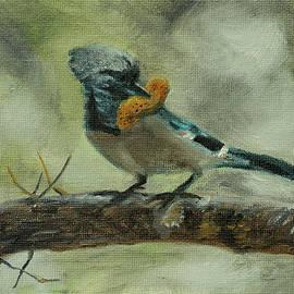 Blue Jay by Kathy Knopp