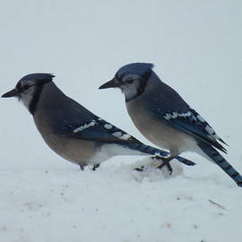 Cindy Treger - Pair of Blue Jays