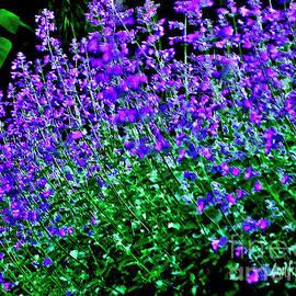 Carol F Austin - Purple Flower Lavender Wall Art