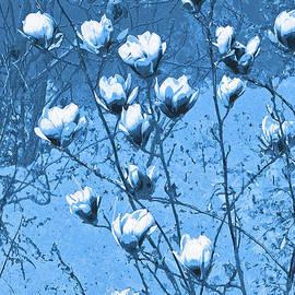 Blue Magnolia by Lali Kacharava