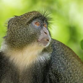 Blue Monkey by Morris Finkelstein