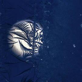 Blue Moon Frosty Trees by Cheryl Baxter
