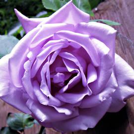 Blue Moon Rose by Kathryn Jones