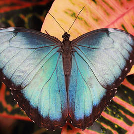 Blue Morpho On Orange Leaf by Angela Murdock