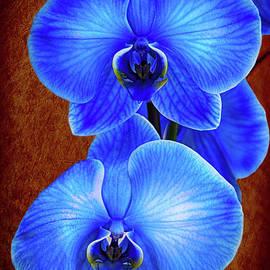 Kasia Bitner - Blue Orchid