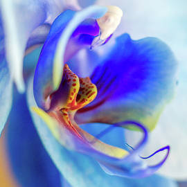 Blue Orchid by Stelios Kleanthous