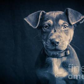 Blue Period Puppy - Edward Fielding