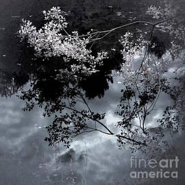Ron Evans - Blue Pond